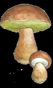 Steinsopp figur